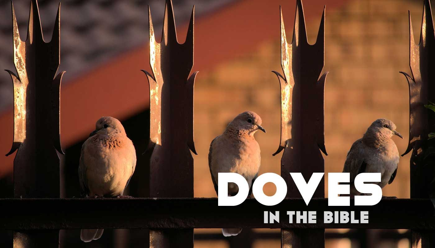 Doves in the Bible